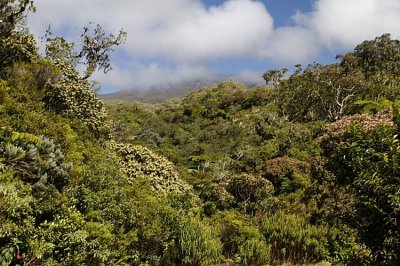 Tempel und Regenwald
