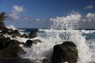 Botanik und Wellen